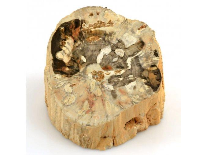 zkamenele drevo madagaskar rez 13