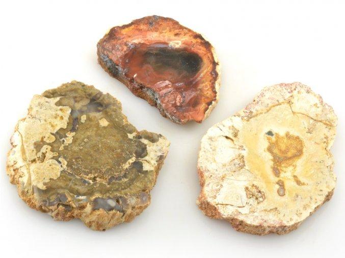zkamenele drevo 3ks 8