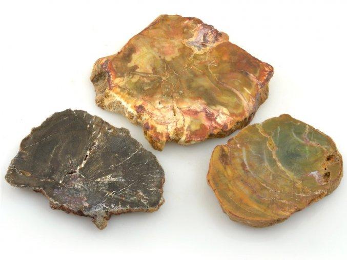 zkamenele drevo 3ks 10