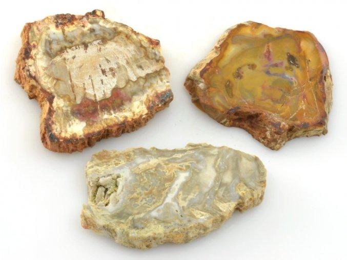 zkamenele drevo 3ks 11