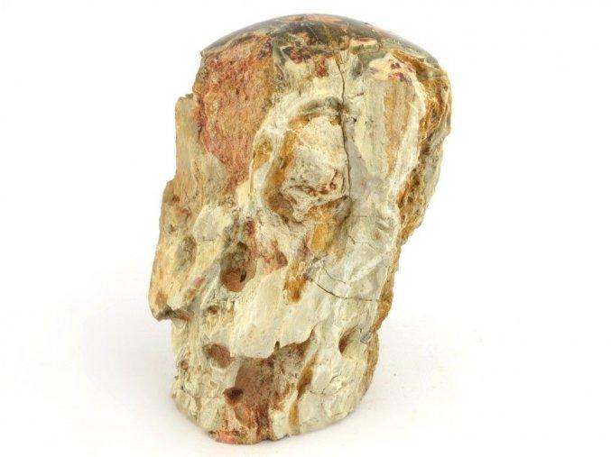 zkamenele drevo 20
