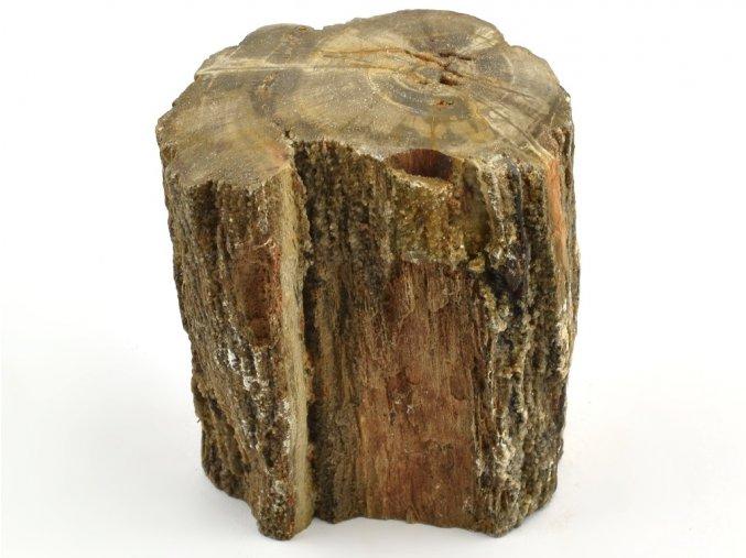 zkamenele drevo 5
