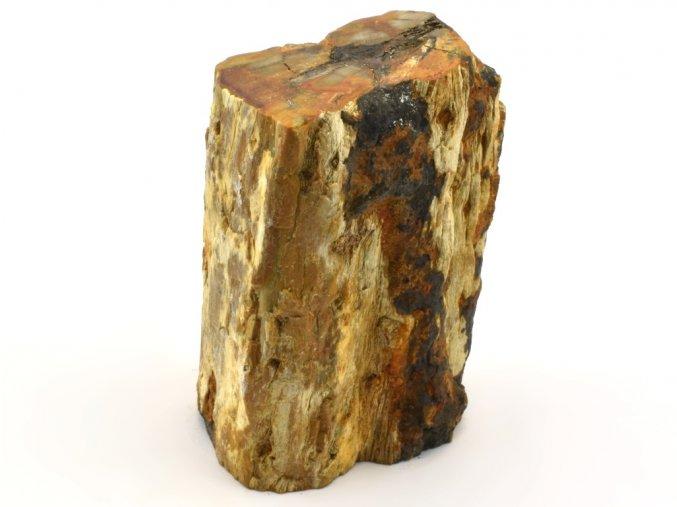 zkamenele drevo 33