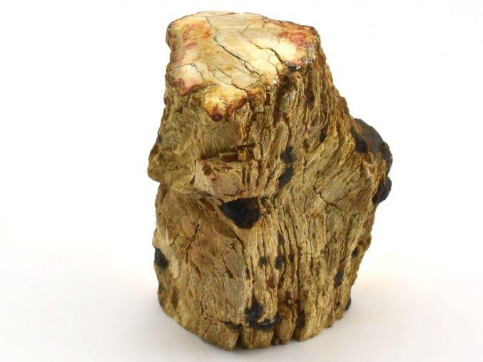 zkamenele drevo 41