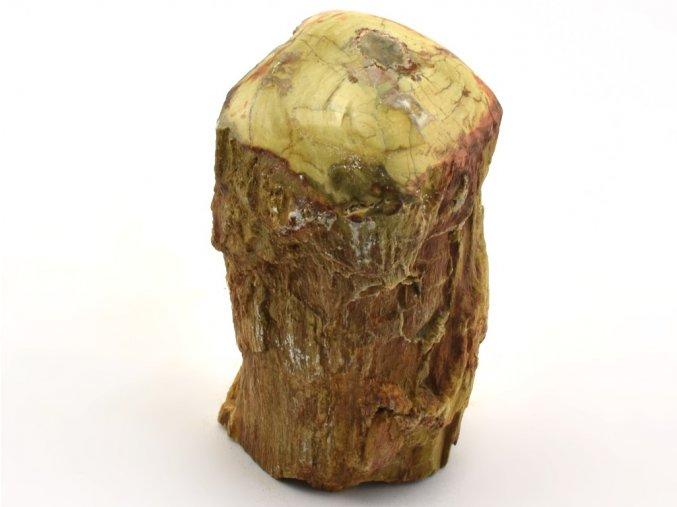 zkamenele drevo 45