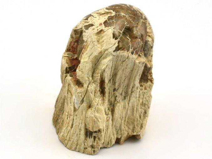 zkamenele drevo 46