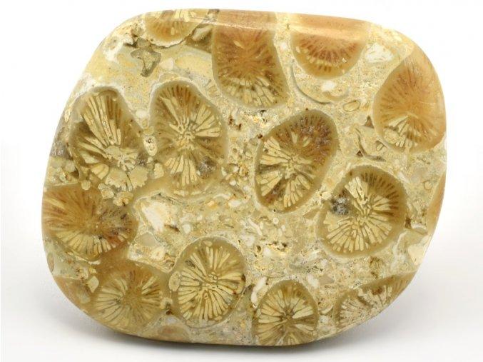 koral madagaskar 6