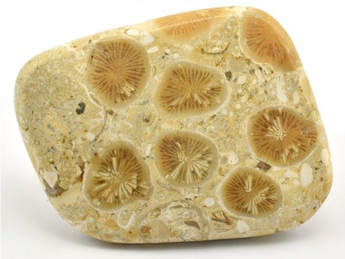 koral madagaskar 8