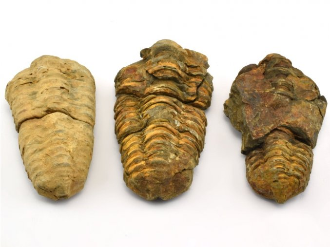 trilobit 3ks 8