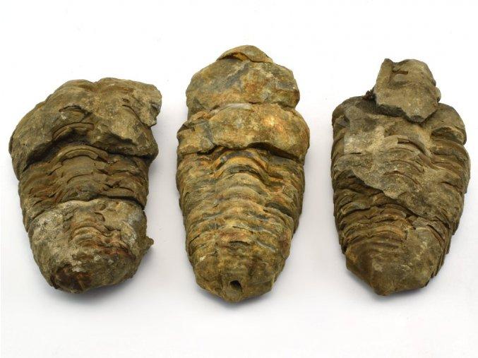 trilobit 3ks 9