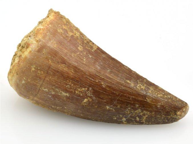 mosasaurus 6