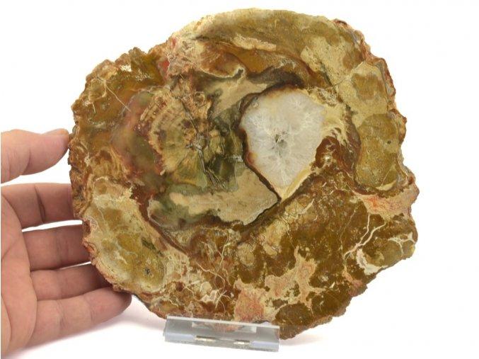 zkamenele drevo plat 1a