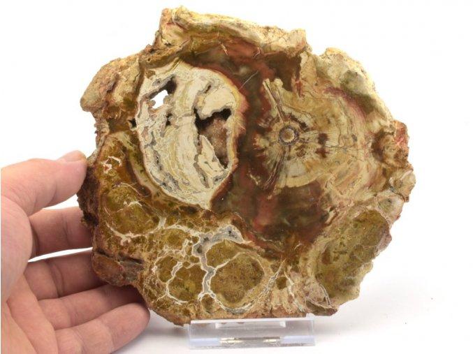 zkamenele drevo plat 6a
