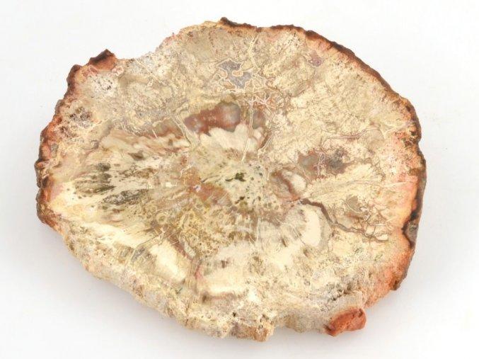 Zkamenělé dřevo, Madagaskar (48)
