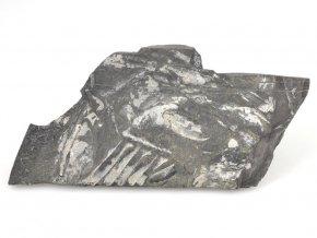 Zkamenělé kapradiny - Pensylvánie (1)