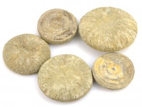 Fosilní korál Cyclolites sp. (5ks)