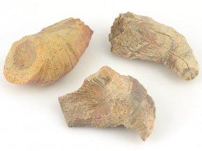 Fosilní korál Rugosa 3ks (1)