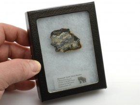 mamuti zub USA 1
