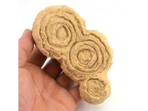 Stromatolit - Maroko (3)