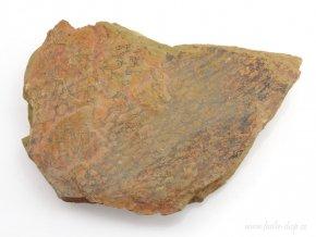 Graptolit Dictyonema sp. (21)