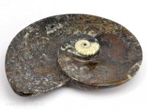 Miska zkameněliny goniatit (24)
