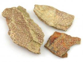 graptoliti (2)