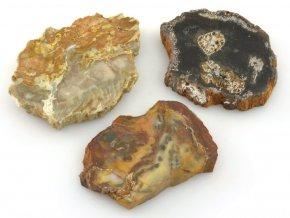 zkamenele drevo 3ks 9