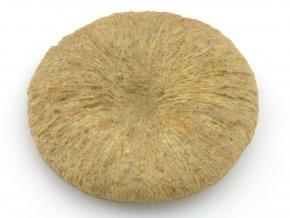 koral Cyclolites 6