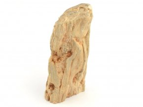 zkamenele drevo 11