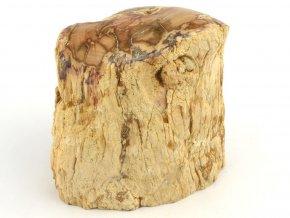 zkamenele drevo 16