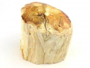 zkamenele drevo 21