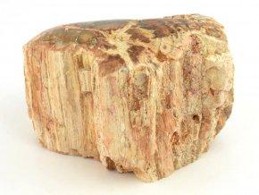 zkamenele drevo 24a