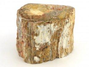 zkamenele drevo 26