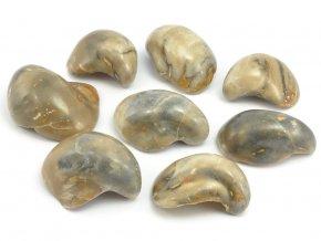 Zkamenělá ústřice Gryphea sp. (1ks)