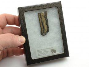 mamuti zub USA 3