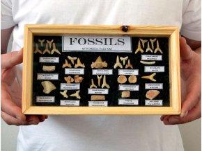 Kolekce žraločích zubů (24x14cm)