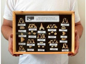 Kolekce žraločích zubů (34x24cm)