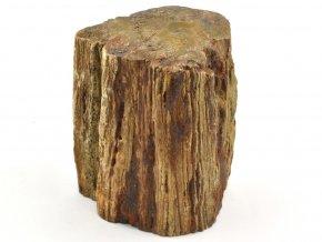 zkamenele drevo 6