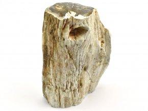 zkamenele drevo 9
