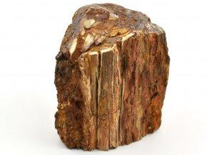 zkamenele drevo 14