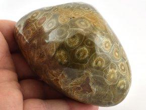 koral maroko 10a