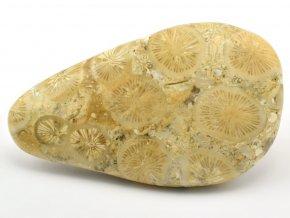 koral madagaskar 3