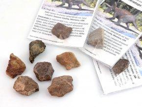 Dinosauří kost Triceratops sp. B kvalita (1ks)