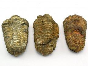 trilobit 3ks 2