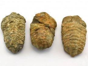 trilobit 3ks 5
