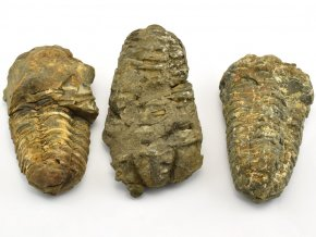 trilobit 3ks 10