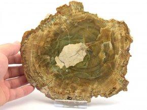 zkamenele drevo plat 2