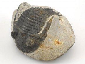 trilobit z maroka 25