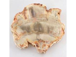 Zkamenělé dřevo, Madagaskar (29)