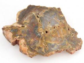 Zkamenělé dřevo, Madagaskar (36)